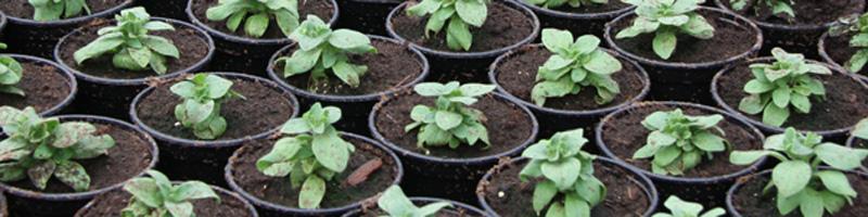 Voorverkoop plantenactie.